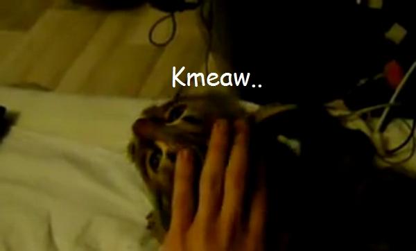 Задай свой вопрос kmeaw